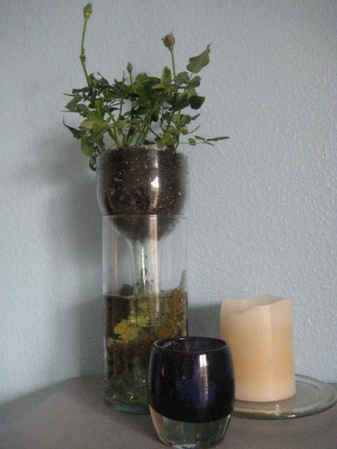 wine bottle self watering planter instructions