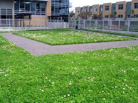 fleur de lawn planting instructions