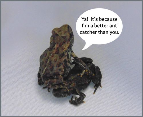 little live pets frog instructions