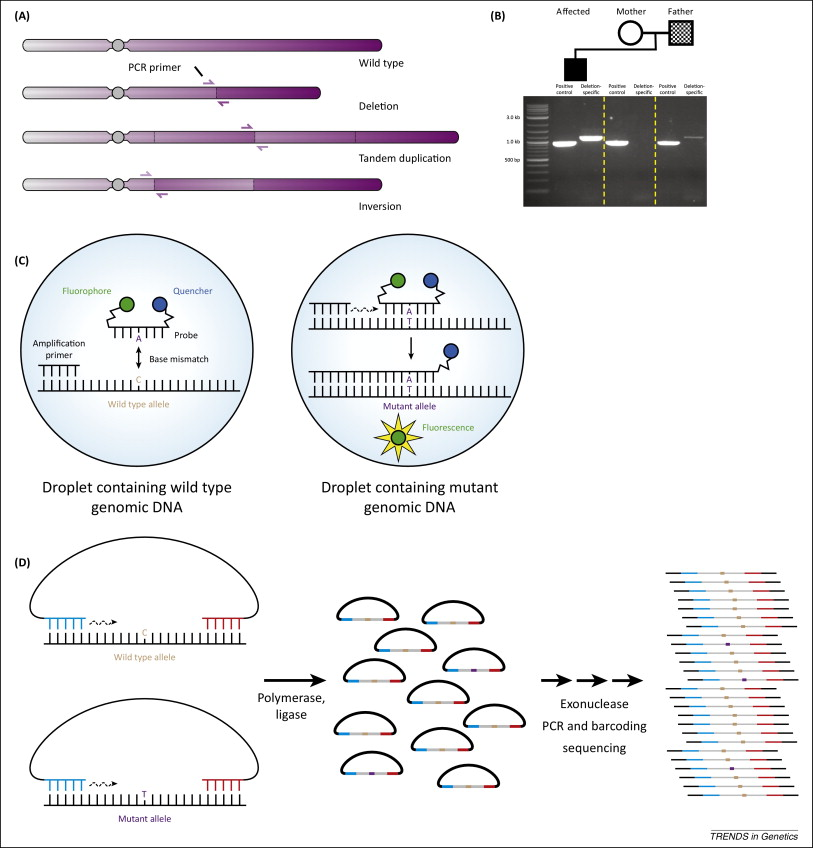 infection genetics and evolution instructions for authors